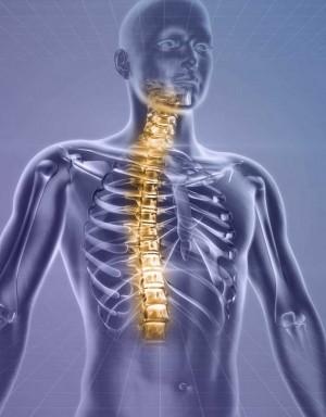 Riallineamento Spirituale - La colonna vertebrale